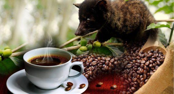 8935106155663 кофе лювак купить в Красноярске Батурина 7